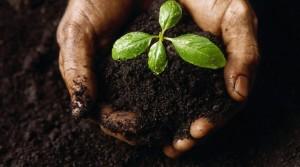 soil-640x357